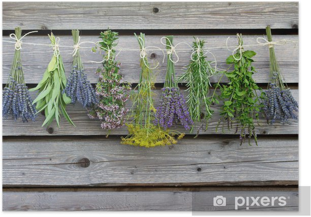Herbs drying on the wooden barn in the garden Poster - Herbs
