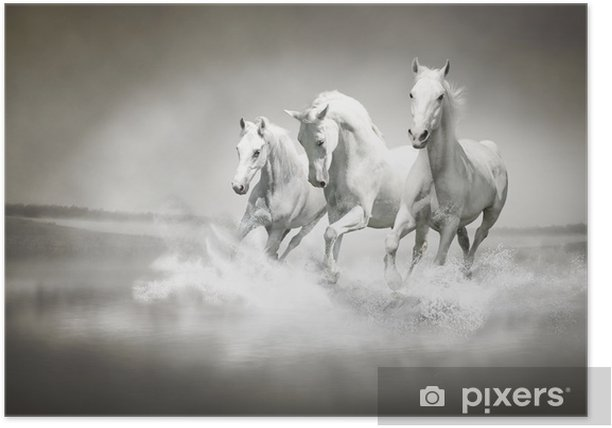 Herd of white horses running through water Poster - iStaging