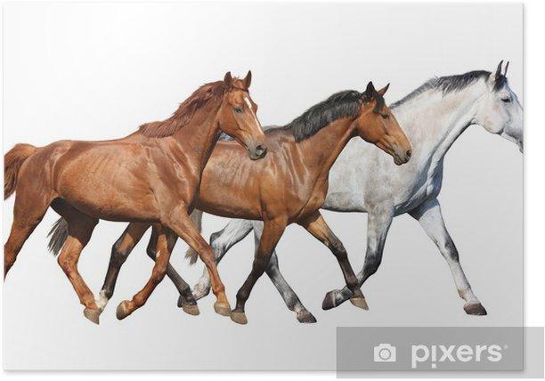 Herd Of Wild Horses Running Free On White Background Poster Pixers
