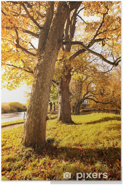 Póster Hermoso paisaje de otoño - Estaciones