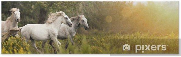 Póster Hermosos caballos blancos corriendo en el campo - Animales
