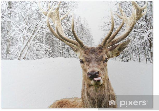 Poster Herten met mooie grote hoornen op een winterse landweg - Thema's