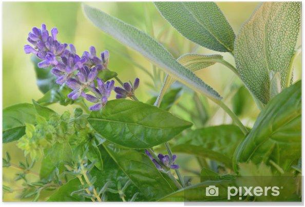 Póster Hiervas - Plantas