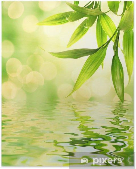 Póster Hojas de bambú reflejado en el agua prestados - Temas