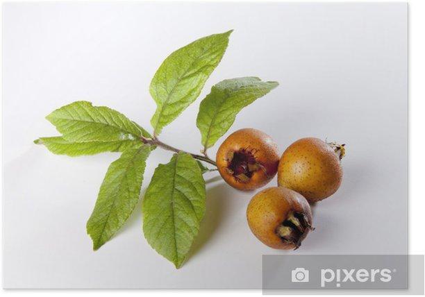 Póster Hojas de níspero - Frutas