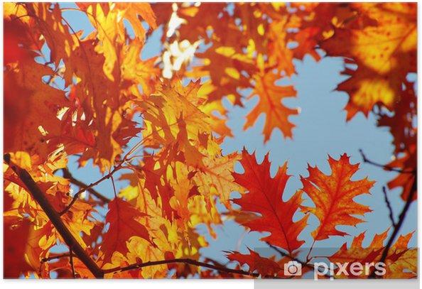 Póster Hojas de otoño. - Temas