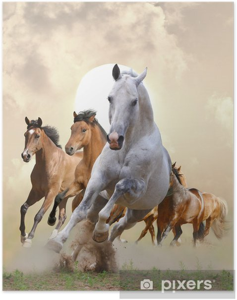 horses in sunset Poster -