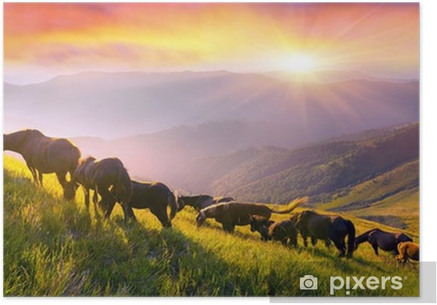 Horses on the mountain top Poster - Animals