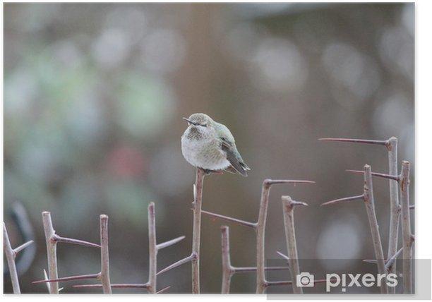 Hummingbird resting Poster - Birds