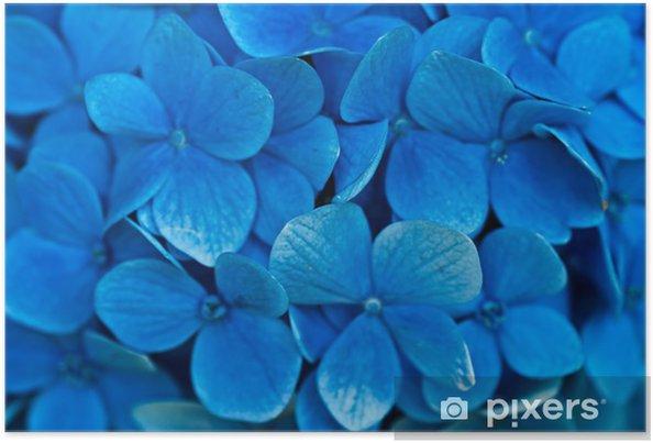 Póster Hydrangea flores - Ecología
