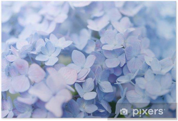 Póster Hydrangea - Flores