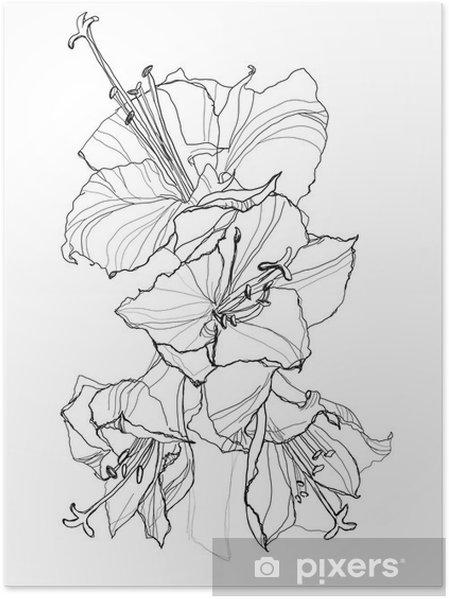 Poster Ibiscus - Fleurs