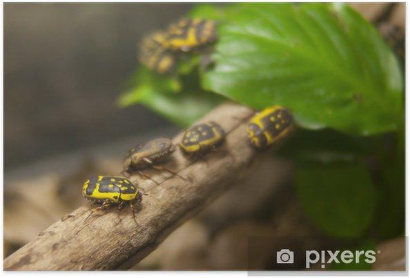 Poster Insecte - Autres Autres