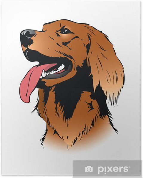 Poster Irish setter chien - illustration vectorielle - Mammifères