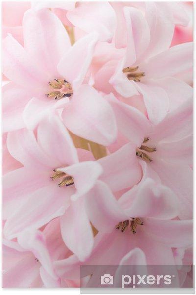 Póster Jacinto rosado - Estaciones
