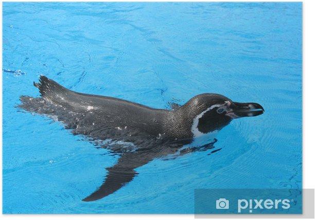 jackass penguin Poster - Aquatic and Marine Life