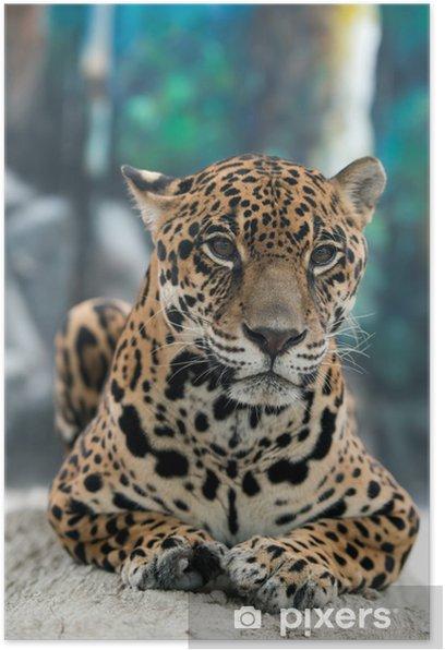 jaguar ( Panthera onca ) Poster - Mammals