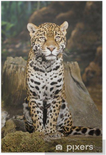 Jaguar Poster - Mammals