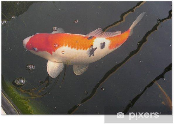 Japanese Koi Carp Poster Pixers We Live To Change