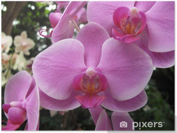 Poster Jardin: orchidée exotique grandi dans un environnement à ...
