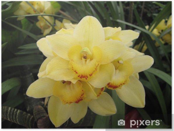 Poster Jardin: orchidée jaune exotique grandi dans un environnement à effet  de serre