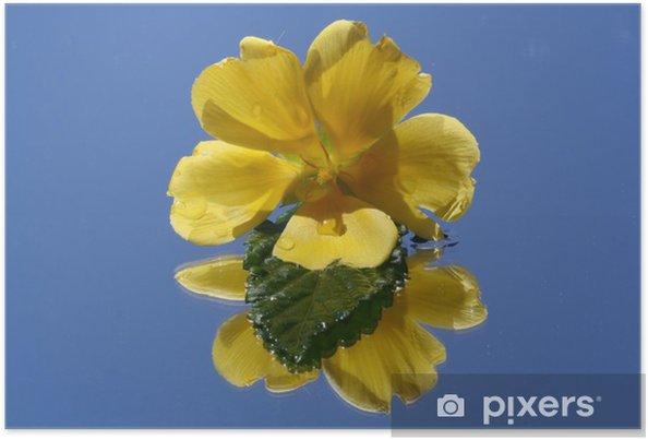 Poster Jaune Strauchbluete Damiana - Plantes