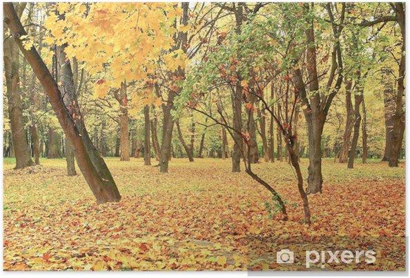 Poster Jauni feuilles sur les arbres dans la forêt d'automne. - Saisons