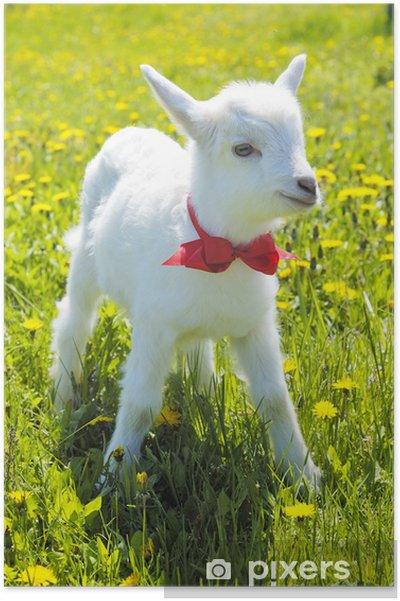 animal  Posters-jeune-bebe-de-chevre-avec-du-rouge-arc-noeud