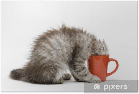Poster Jeune chat joue avec une tasse - Mammifères