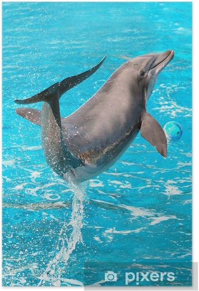 Poster Jeux de dauphin - Thèmes