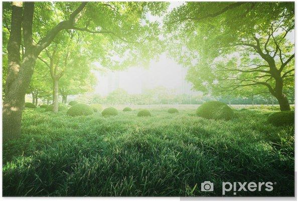 Poster Journée ensoleillée dans le parc de l'été - Villes d'Asie