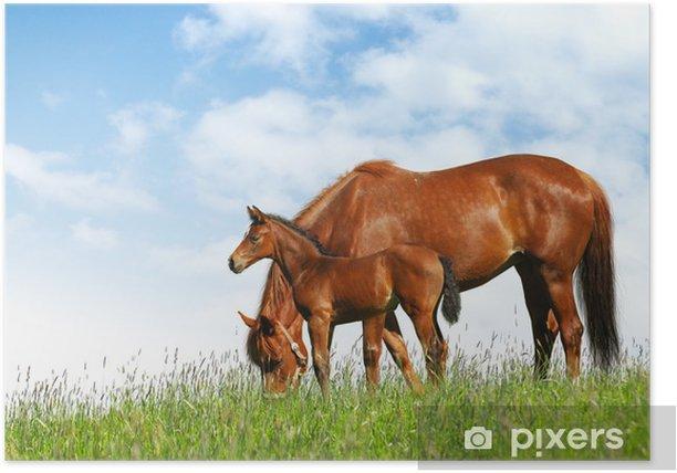 Poster Jument et son poulain dans un champ - photomontage réaliste - Mammifères