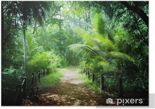 Jungle in the Seychelles islands Poster - Nature