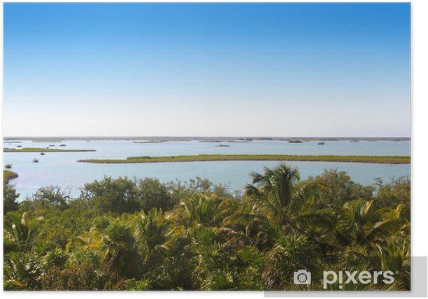 Poster Jungle mangrove lagon palmier jungle - Amérique