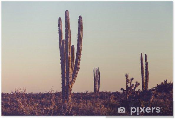 Poster Kaktus i Mexiko - Natur och vildmark