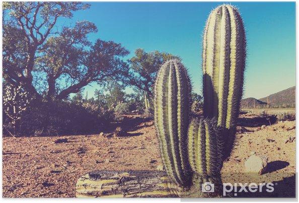Poster Kaktus i Mexiko - Amerika