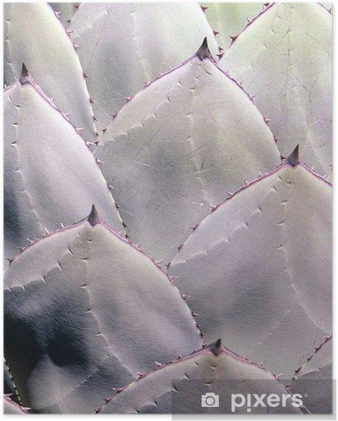 Poster Kaktus - Växter