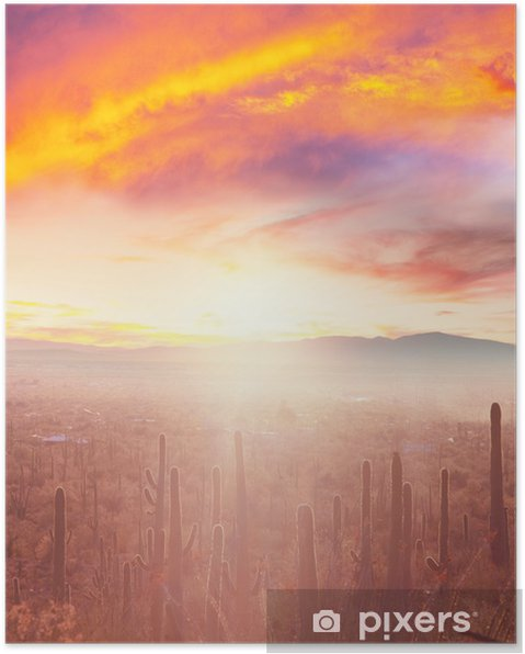 Poster Kaktus - Natur och vildmark