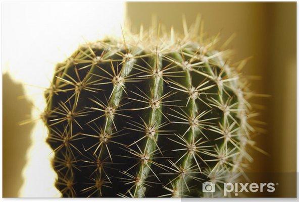 Poster Kaktus - Blommor