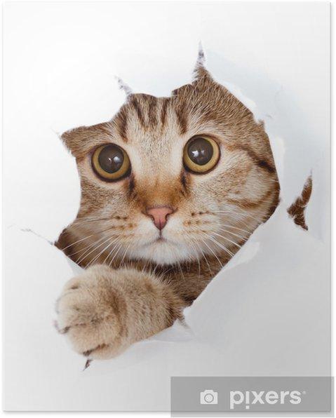 Poster Katt tittar upp i papperssidan trasiga hål isolerade - Teman