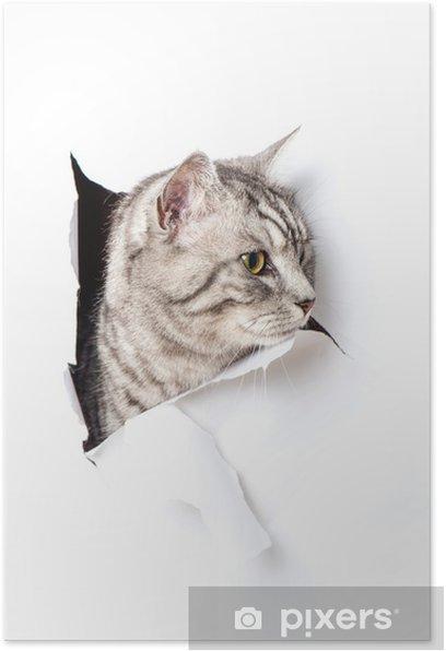 Poster Katze durchbricht Papier - pauses de chat à travers le papier - Mammifères