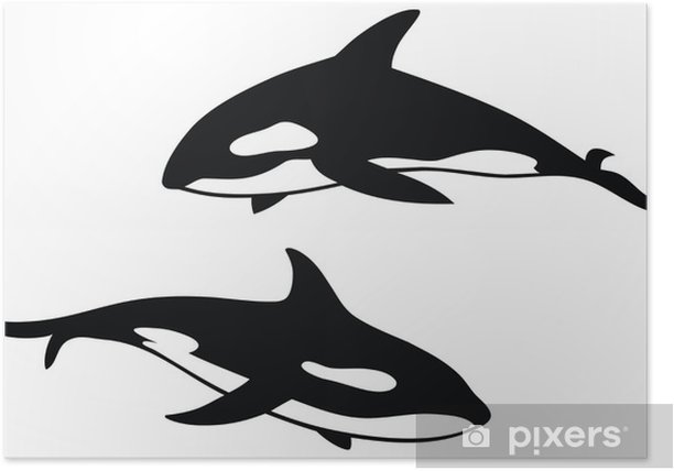 Killer whale Poster - Wall decals