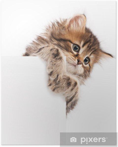 Poster Kitten met lege - Zoogdieren