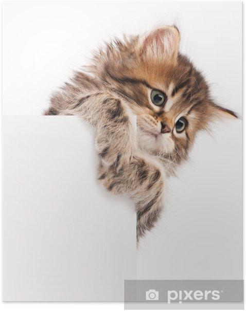 Kitten with blank Poster - Mammals