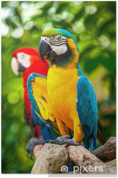 Super Poster Kleurrijke blauwe papegaai ara • Pixers® - We leven om te ZJ-05