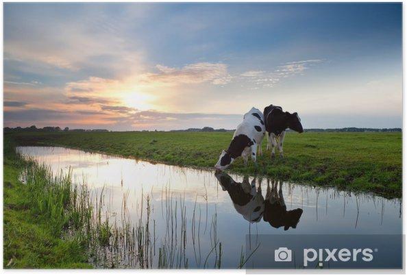 Poster Koeien grazen bij zonsondergang - Thema's