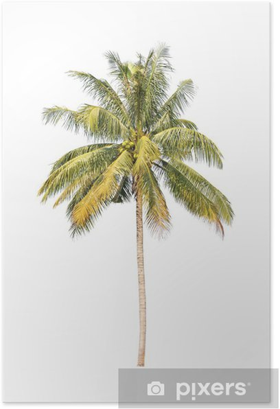 Poster Kokosnoot palmbomen geïsoleerd op witte achtergrond - Muursticker