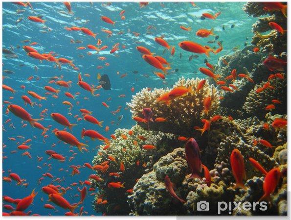 Poster Korallenriff - Koraalrif