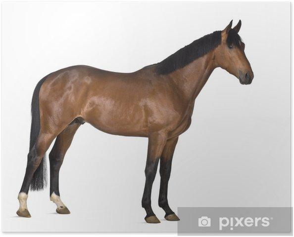 Verrassende Kinderkamer Paarden : Poster kruising paard tegen een witte achtergrond u2022 pixers® we