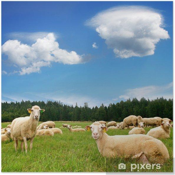 Poster Kudde schapen op mooie bergweide - Zoogdieren